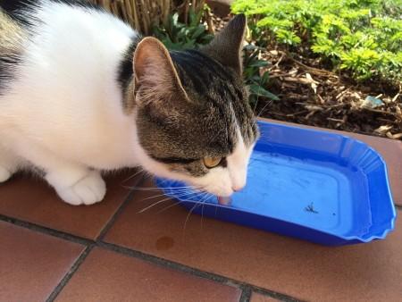 猫には健康に影響の無いお水を