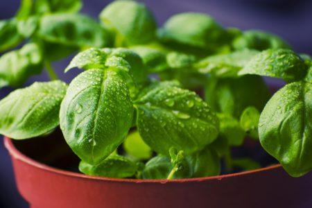 植物で活性酸素を減らす